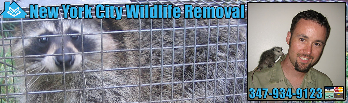 New York City Wildlife and Animal Removal